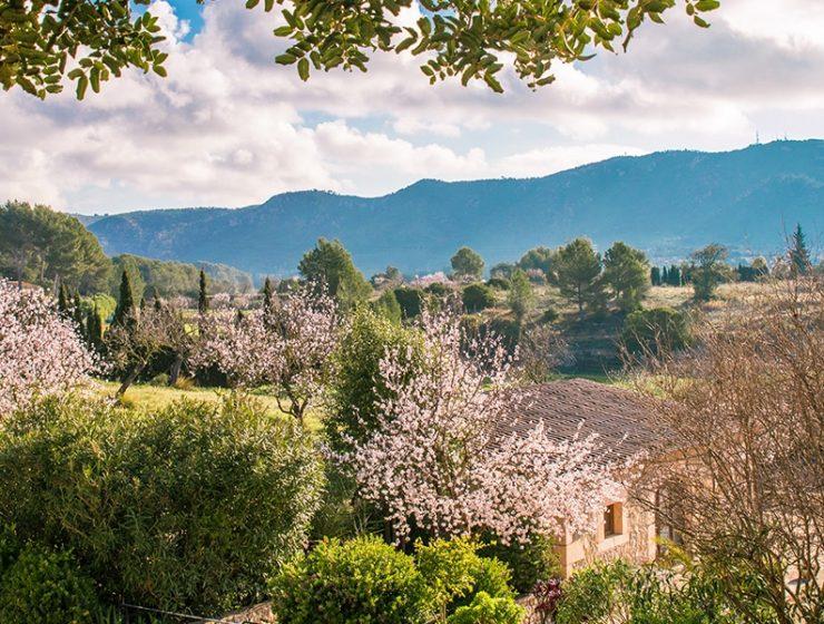 almond blossom fileds 740x560 - 9 Fotos que harán que quieras visitar Mallorca en Febrero