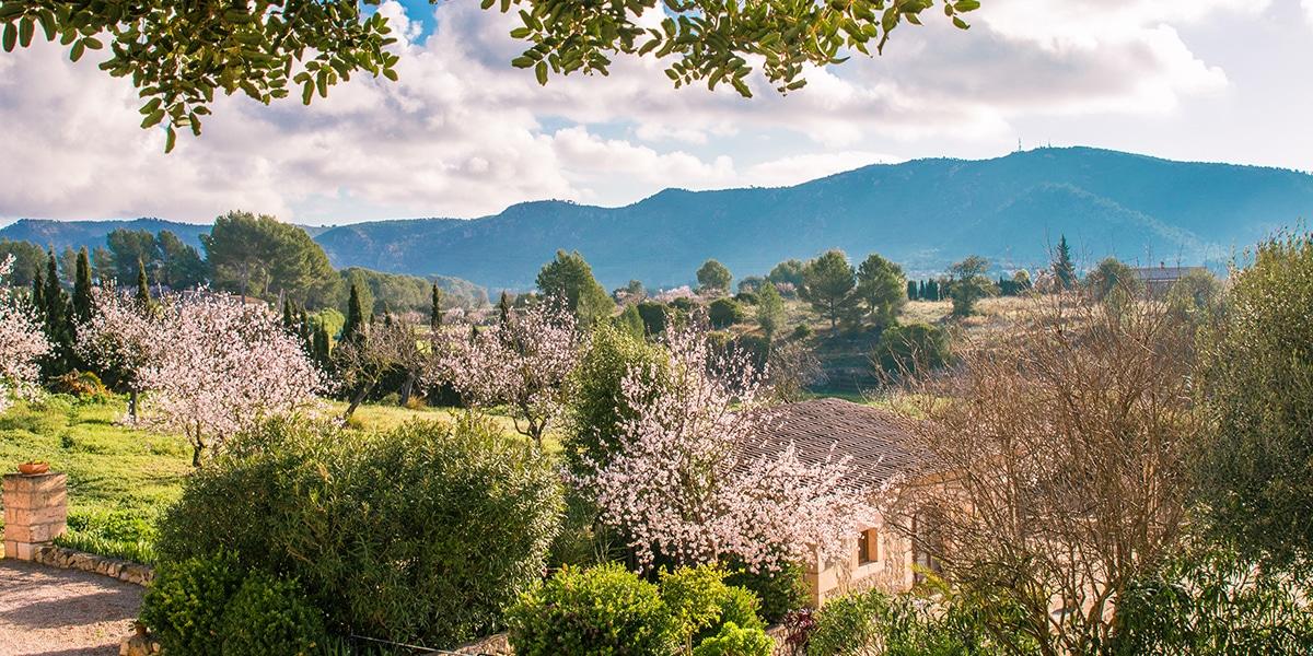 almond blossom fileds - 9 Fotos que harán que quieras visitar Mallorca en Febrero